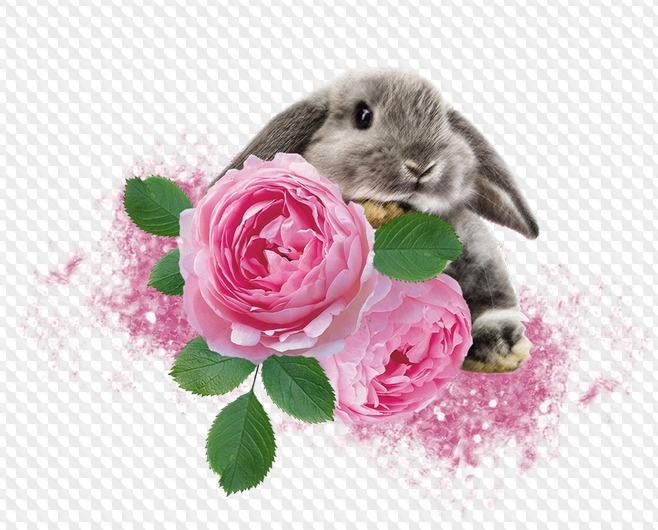 открытка заяц с букетом цветов результате над