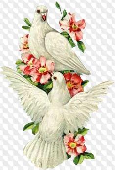 Анимация свадебные голуби летят на прозрачном фоне
