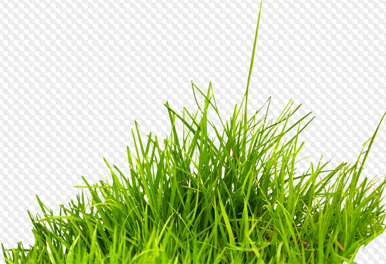 Free Clipart Trees Png Grass Png Reeds Png 37 Png Images Transparent Download