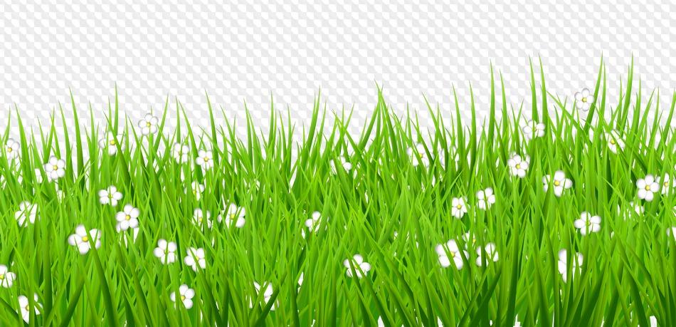 Картинка трава на белом фоне для детей