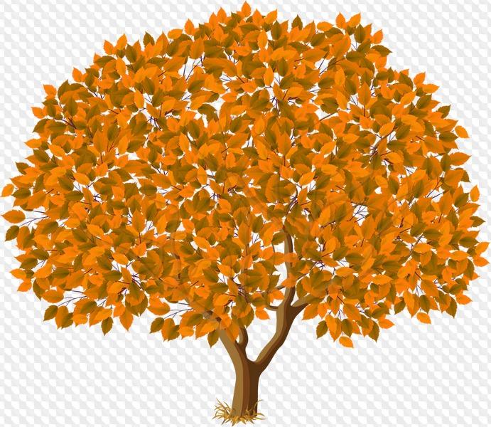 картинки дерево с листьями прозрачный фон музыканта является