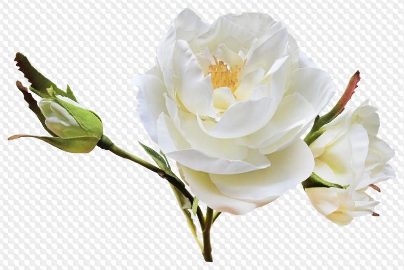 Днем, цветы белые картинки для фотошопа