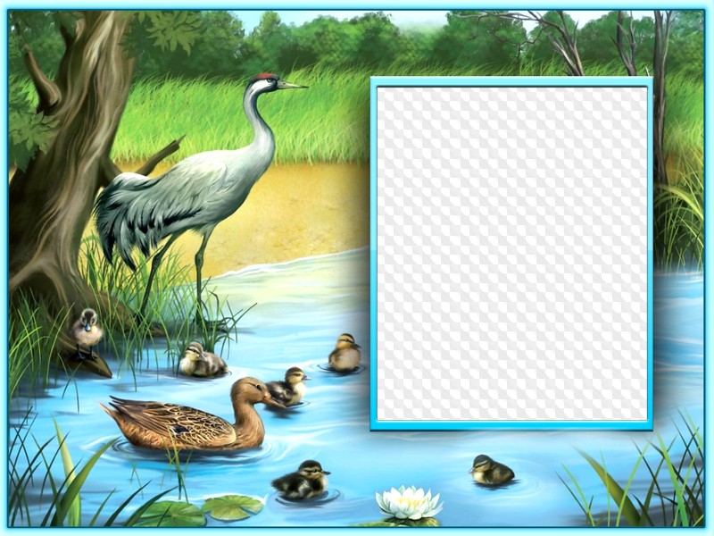 birds and nature photo frame template frame psd png download frame psd png download