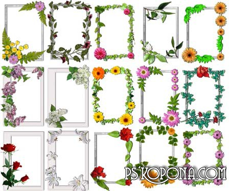 Рамки PNG цветочные / free flower frames 15 png free download