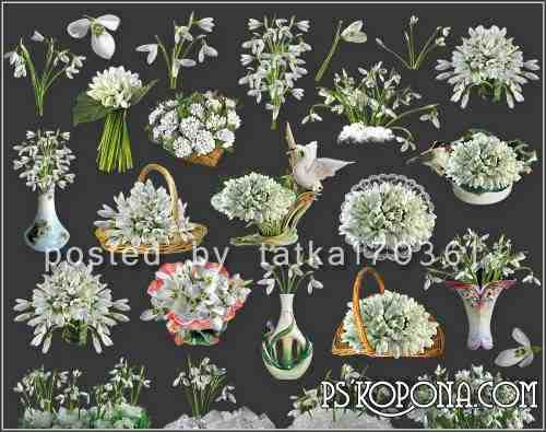 Clipart for Photoshop on a transparent background - Snowdrop flowers