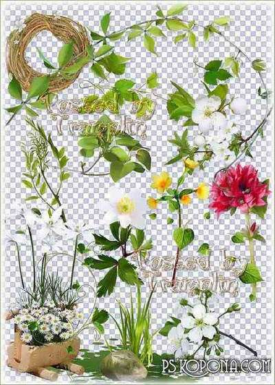 Сlipart on a transparent background - Spring, flowers, herbs