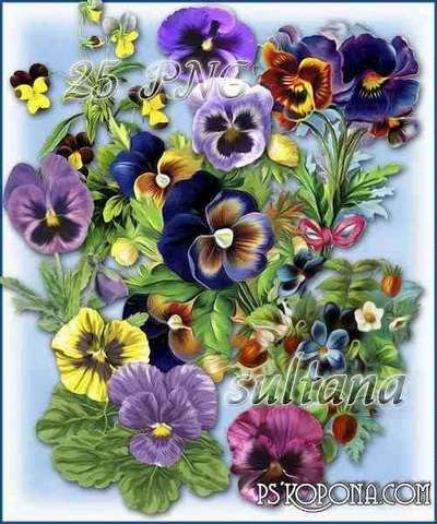 Violets are drawn 25 png and bouquets of violets png on a transparent background