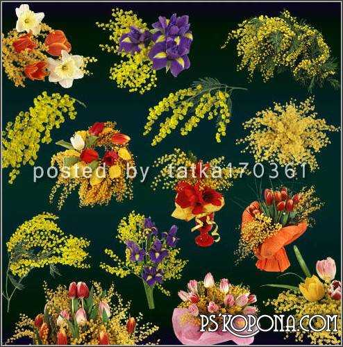 Clipart for Photoshop - Mimosa, bouquets and arrangements with branches of mimosa