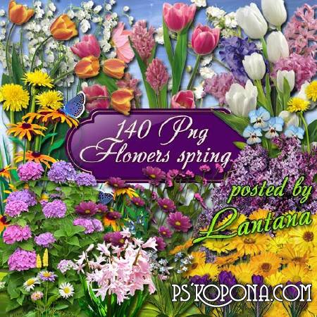 Clipart - Spring flowers, in them so much tenderness, love and beauty