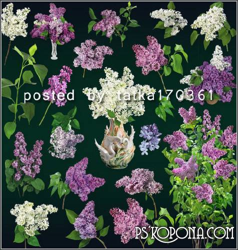 Floral clipart for Photoshop - Lilac, branches and flowers of lilac