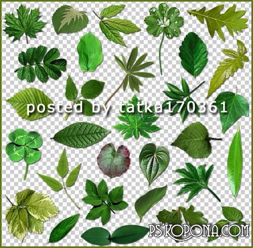 Clipart for Photoshop - Green leaves of different trees