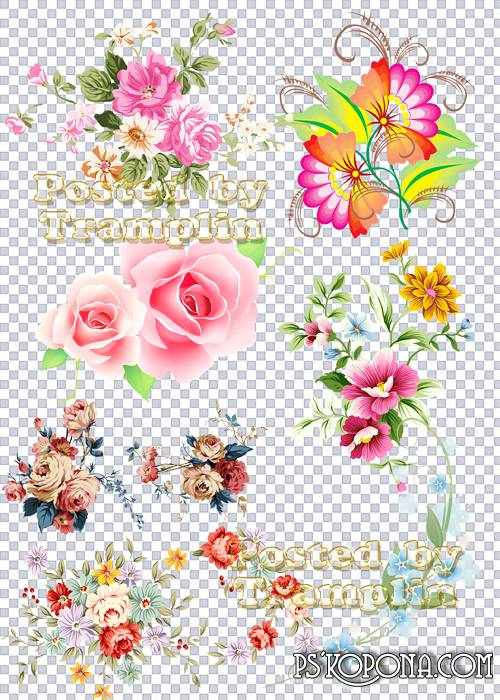 Clipart on a transparent background – Florets