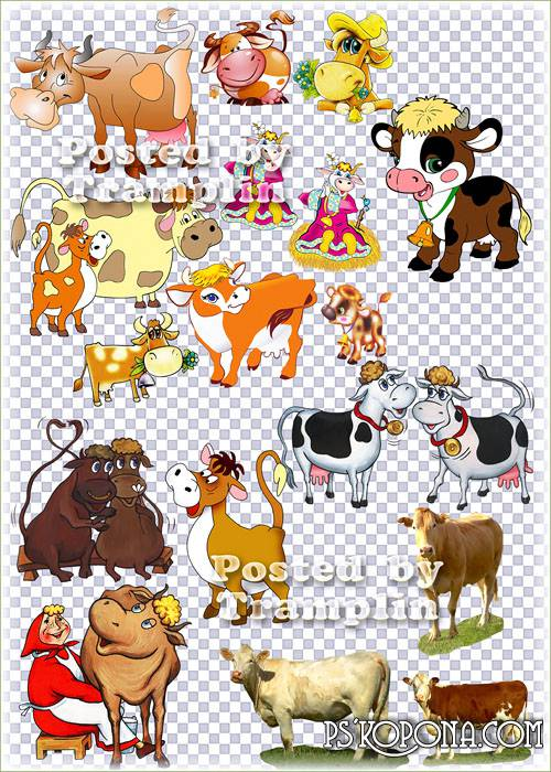 Clipart on the transparent – Cows, bull-calves and calfs