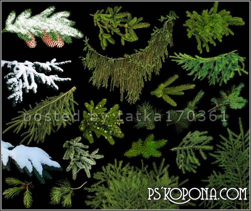 Clipart for Photoshop - Spruce twigs to create a winter work