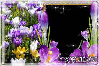 Frame womens - spring crocuses