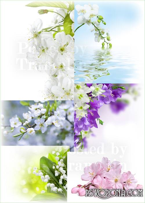 Spring flowers – Beautiful gentle backgrounds