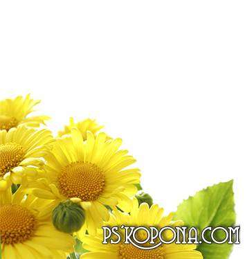PSD, PNG Photoframe - Yellow Flowers
