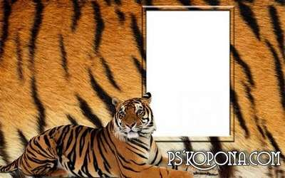 Frame for a photo - the Beautiful tiger