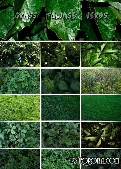 Grass, foliage, herbs - textures for design