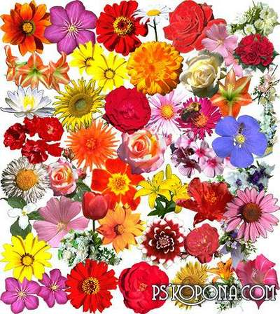 Free Clipart Flowers png images - Free download