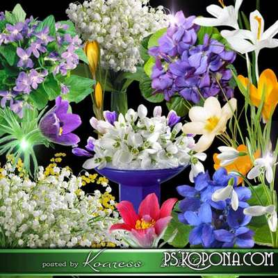 Spring flowers png images, violets, snowdrops, lilies, crocuses - png clipart on a transparent background