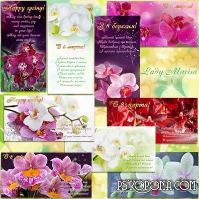 Set of Postcards - The charm of orchids
