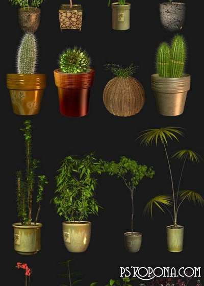 Plants and flowers in pots