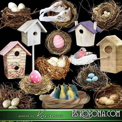 Spring png clipart for design, Bird nests png and bird houses png - Free download