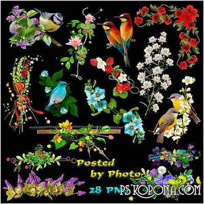 Flowers png, birds png images, clipart png on a transparent background - Free download