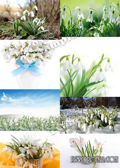 Snowdrops – Spring backgrounds
