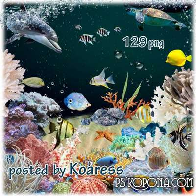 Png clipart - sponges, stones, seashells, starfish and other inhabitants of the coral reef on a transparent background