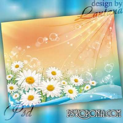 PSD source - Daisy petals shining colorful day