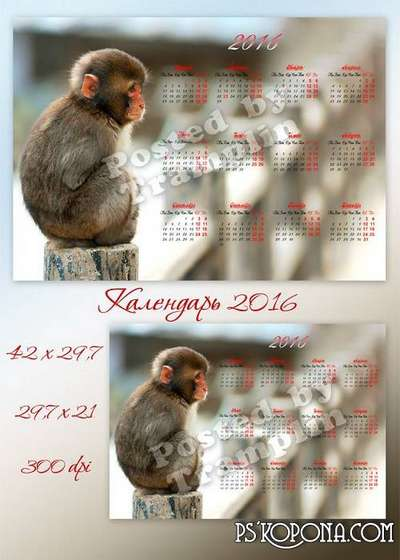 Wall calendar for 2016 with the monkey