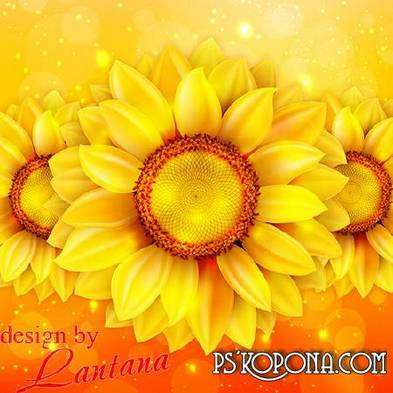 Free PSD source for photo design (layered PSD) - Flowers Sunflowers