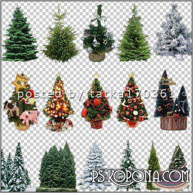 Clipart for Photoshop - Christmas trees for the creation and design of Christmas activities