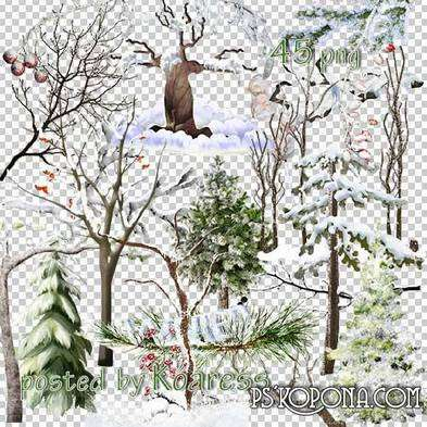 PNG Clipart for design - trees and branches in winter in the snow