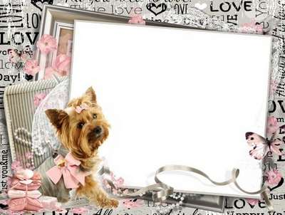 Free women's photo frame with a dog Yorkshire Terrier