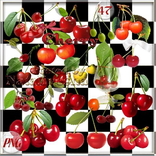 Clipart- the Ripe cherry has kept up in a garden free download from google drive