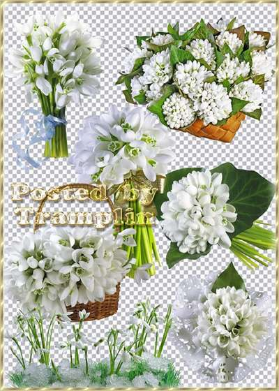 Free Snowdrops with bows and in baskets - 12 png images