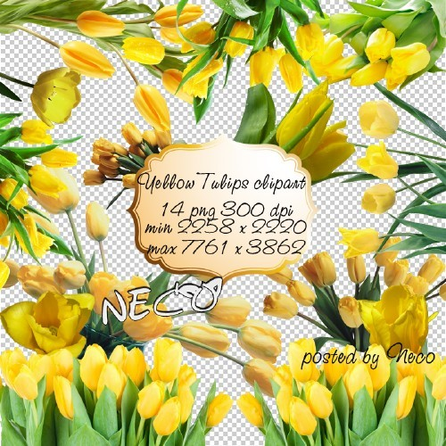 Yellow Tulips PNG download - free 14 png images (transparent background)