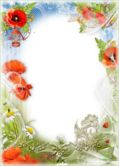 Frame with flowers - Camomiles, poppies blossom on a meadow and smell