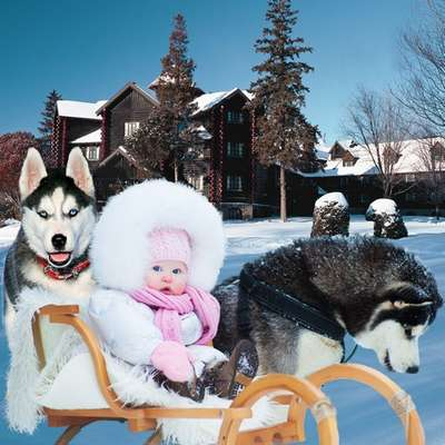 Free photoshop costume psd template for children - little girl on a sled with dogs