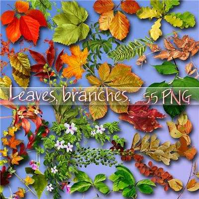55 png Leaves, branches