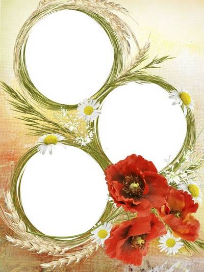 PSD Frame for three photos with poppies, daisies and ears of wheat wheat