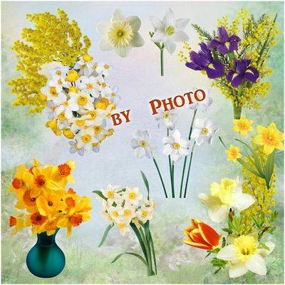 Flower clipart png Mimosa and Daffodils 22 PNG files 1285x2080 - 4000x2567- transparent background
