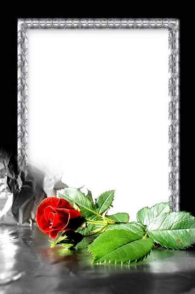 Stylish Flower Frame - Red Rose