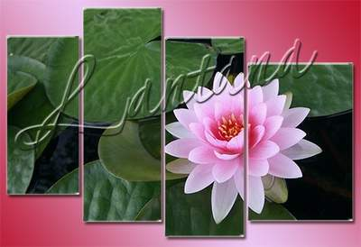 Polyptych in PSD - The charm of a water lily