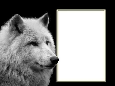 Photoshop Frame psd template with wolf