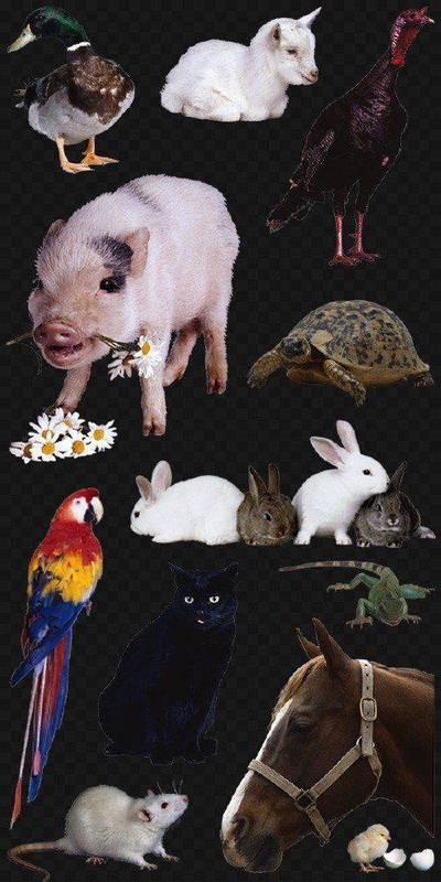 Clipart PNG images Pets - 120 PNG | ~ 3156x3156 px on a transparent background, download horse, chicken, bird, spider, insects, cat, dog, goose, cow, pig, lizard, turtle