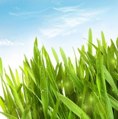 Fresh green spring backgrounds
